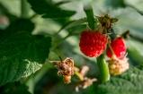 Fruits !!