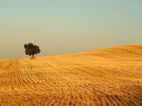 tree-golden-field.jpg