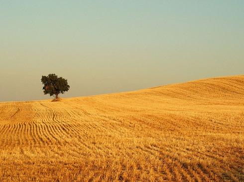 tree-golden-field.jpg
